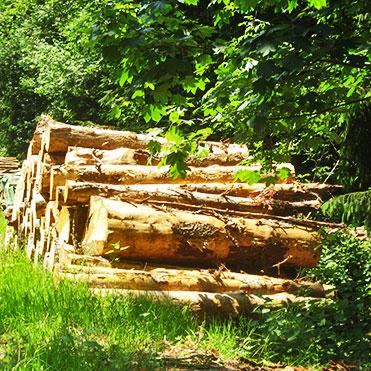 Link zu Gute Gründe - SCHWARZWALD CLT massive Holzbauelemente