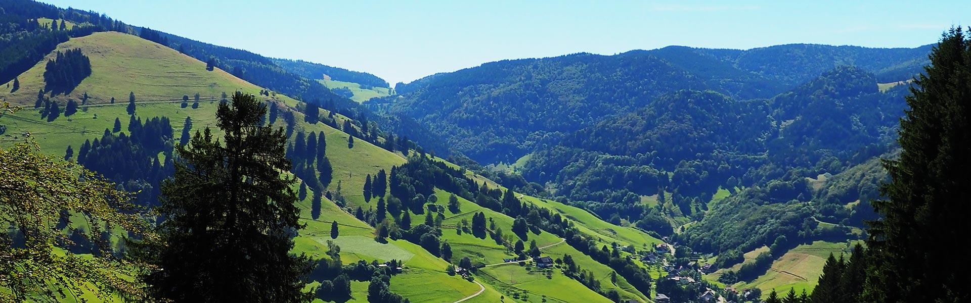 SCHWARZWALD CLT MassiveHolzbauelemente aus Staufen - Ansicht Münstertal