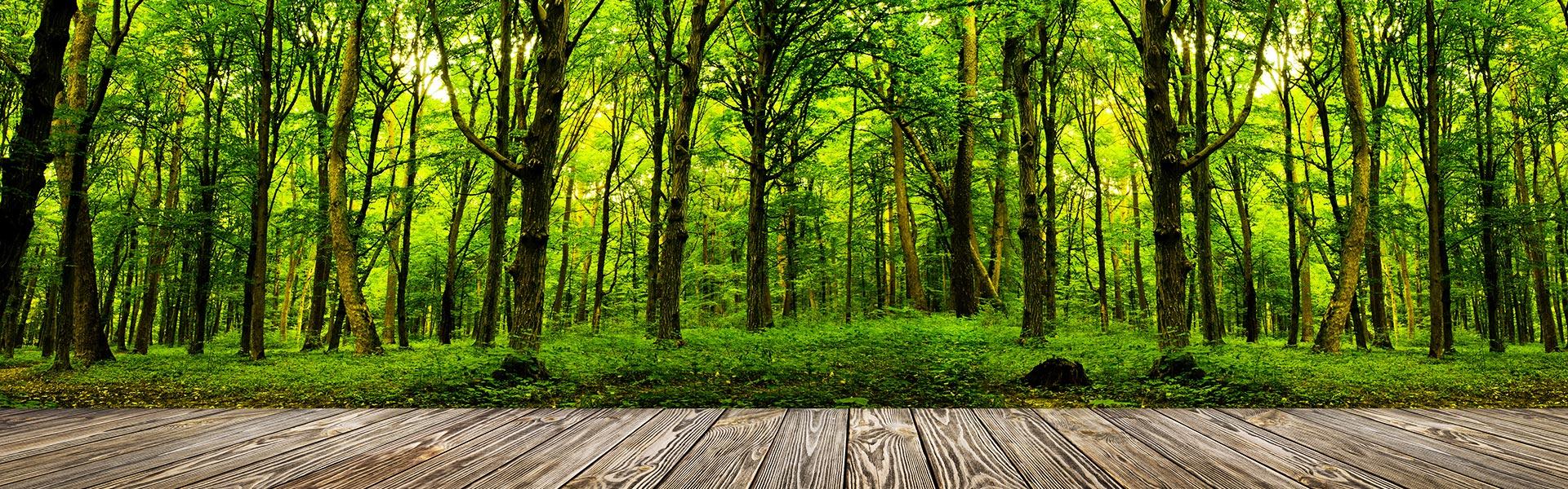 SCHWARZWALD CLT - Ansicht Wald und Holzboden